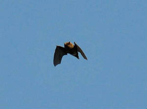 bat5_carrignagour_26112011.jpg