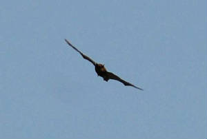 bat8_carrignagour_26032011.jpg