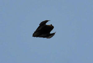 bat9_carrignagour_26032011.jpg