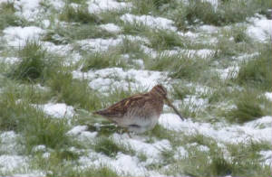 snipe_kilmurray_dec3rd2010_051.jpg