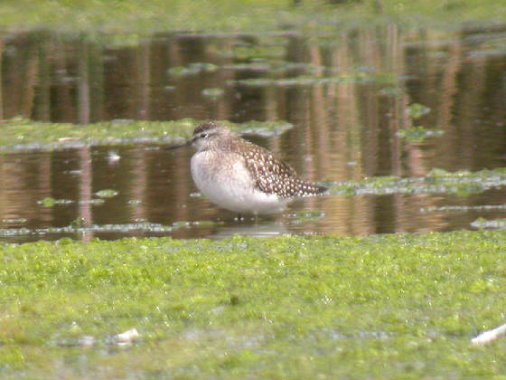 woodsand_killongford08092012_cf_3.jpg